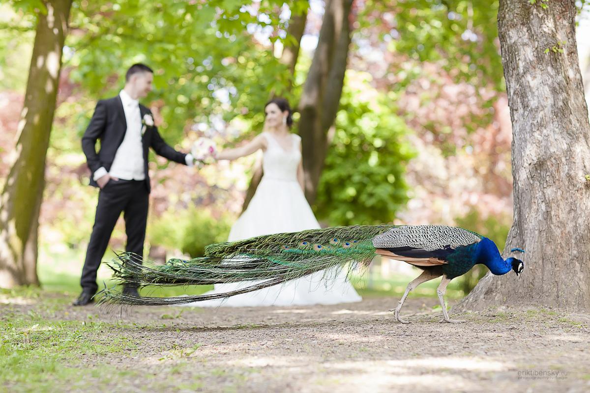 eriktibensky.eu-svadobny-fotograf-wedding-photographer-2117