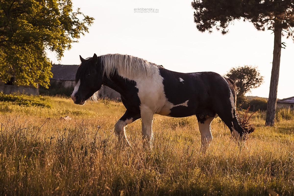 eriktibensky.eu-fotograf-priroda-nature-zvierata-animals-3037