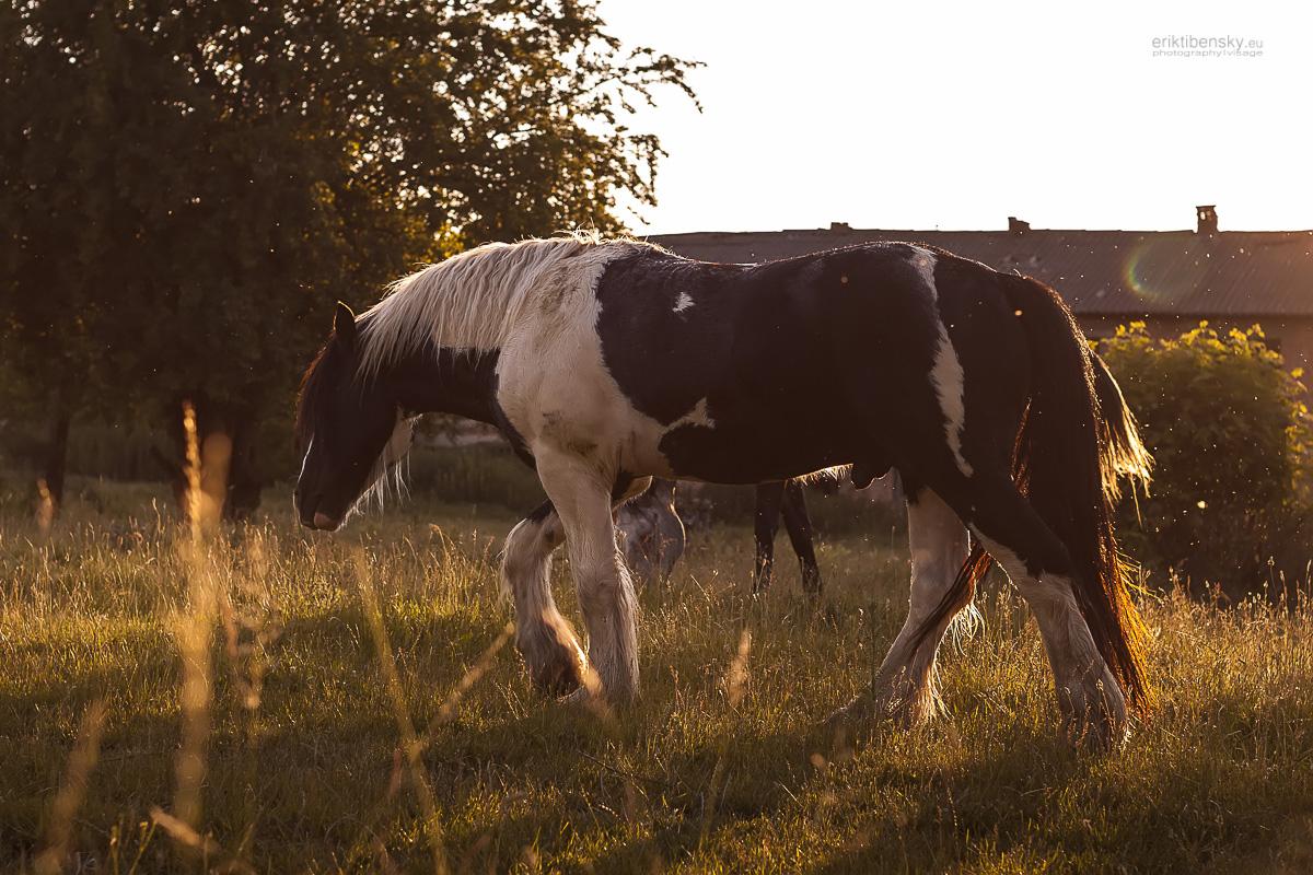 eriktibensky.eu-fotograf-priroda-nature-zvierata-animals-3038